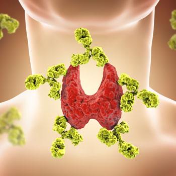 adrenal-thyroid-thumb