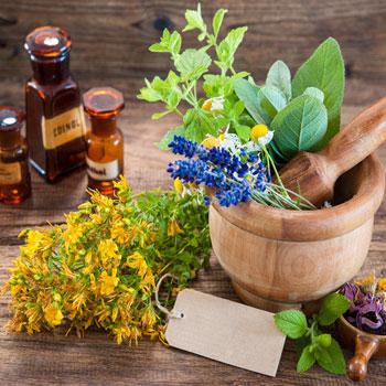 botanical-medicine-thumb
