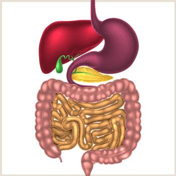 digestive-health-thumb